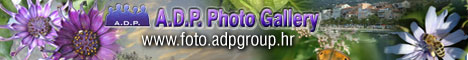 A.D.P.Photo Gallery